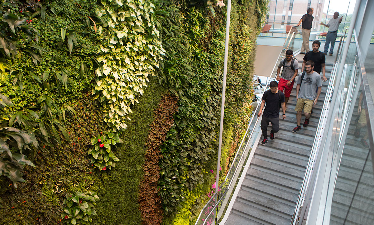 The living wall at IFNH